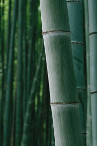 Sustainable bamboo
